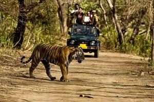 Бенга́льский тигр — подвид тигра, обитает в Северной и Центральной Индии