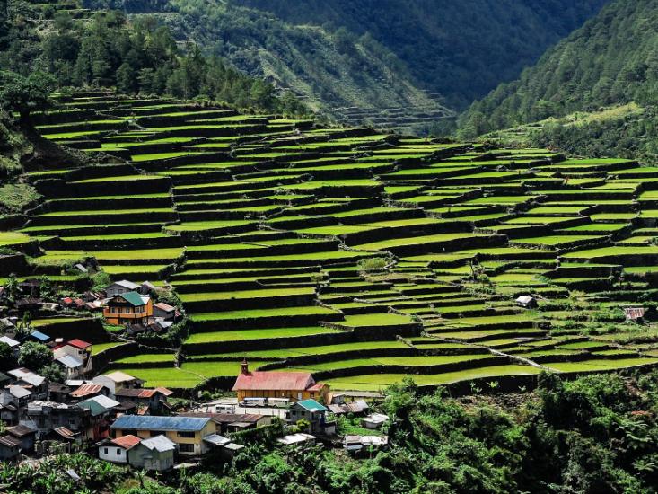 Рисовые террасы Банауэ на Филиппинах