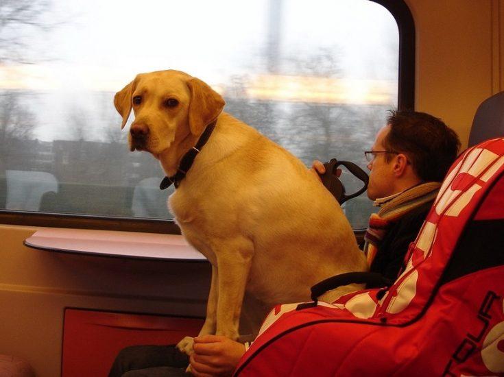 Поездка с животным в поезде