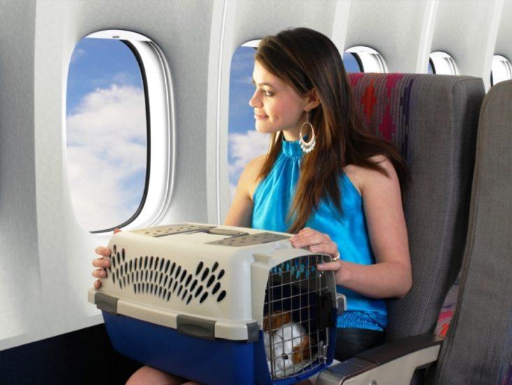 Перелет с животным в самолете