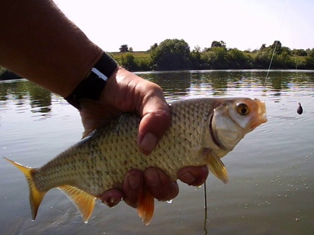 Особенности рыбалки на Оке