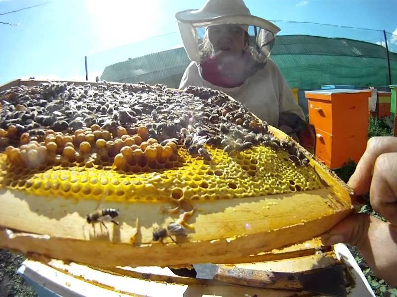 Стоянка пчеловодов в Башкирии